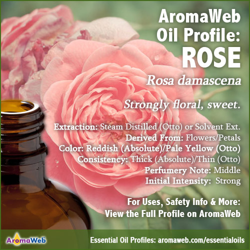 Rose Essential Oil Profile
