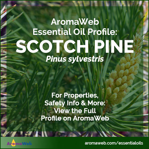 Scotch Pine Essential Oil Profile