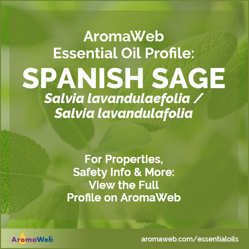 Spanish Sage Essential Oil Profile, Benefits and Uses | AromaWeb