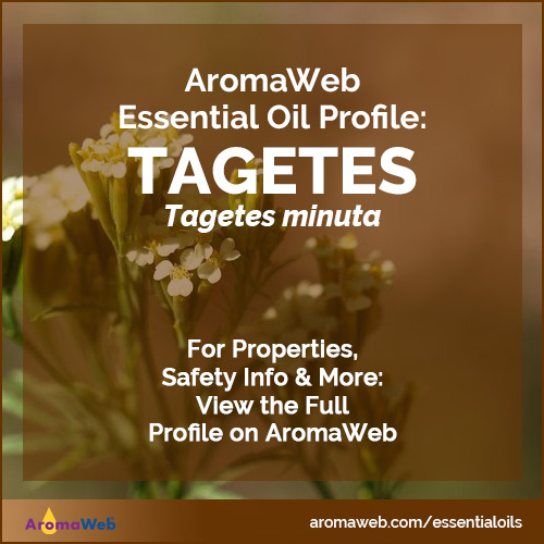 Tagetes Essential Oil Profile