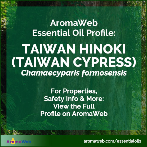 Taiwan Hinoki Essential Oil Profile