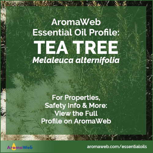 Tea Tree Essential Oil Profile