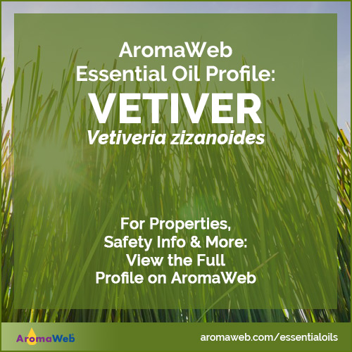Vetiver Essential Oil Profile