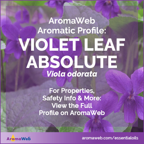 Violet Leaf Absolute Profile