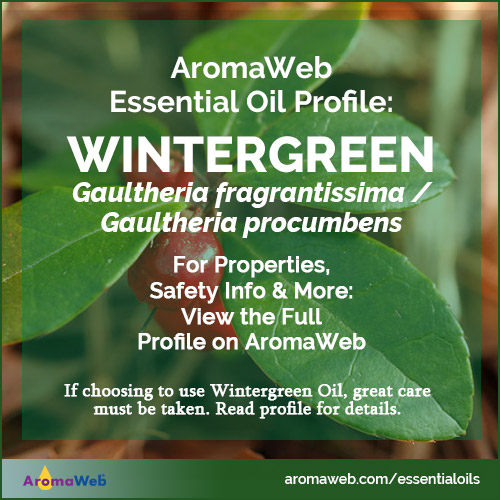 Wintergreen Essential Oil Profile