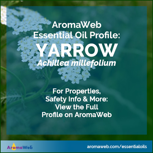 Yarrow Essential Oil Profile